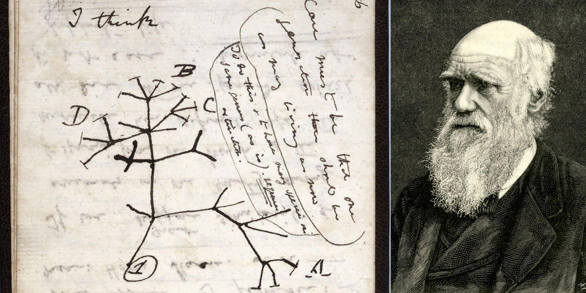 Cambridge à la recherche de deux carnets de notes disparus de Charles Darwin