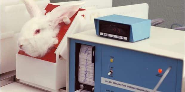 Pour ou contre l'expérimentation animale? - La Libre