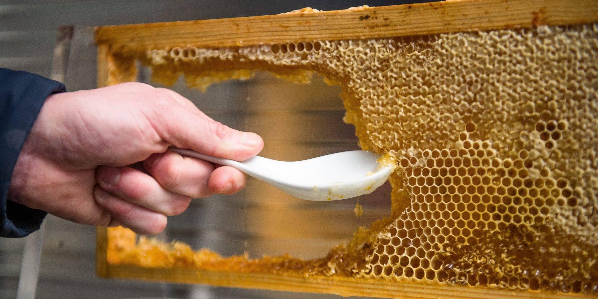 Un homme détenu trois mois aux Etats-Unis pour avoir ramenée du... miel