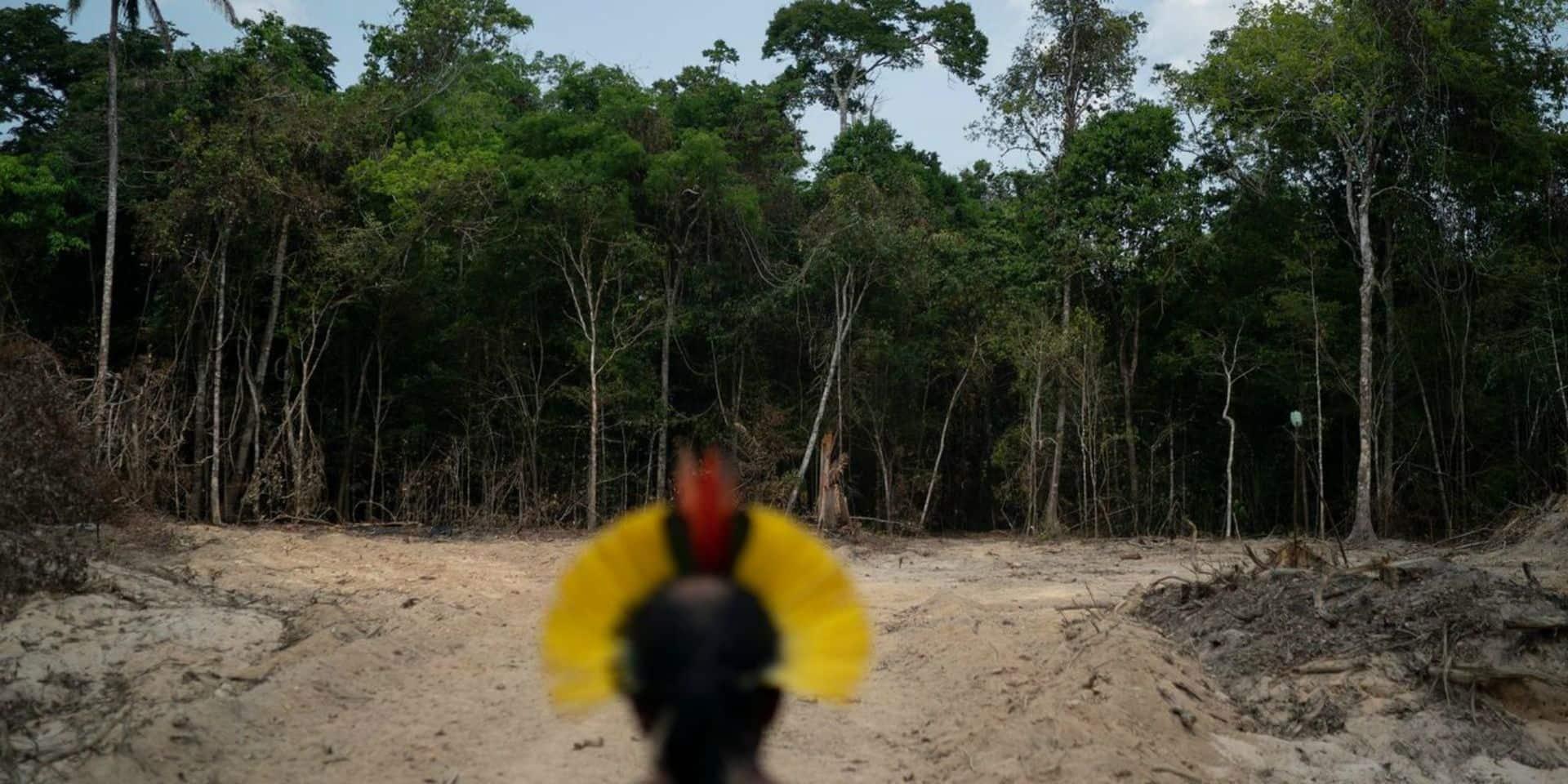 La déforestation a plus que doublé en Amazonie brésilienne en un an