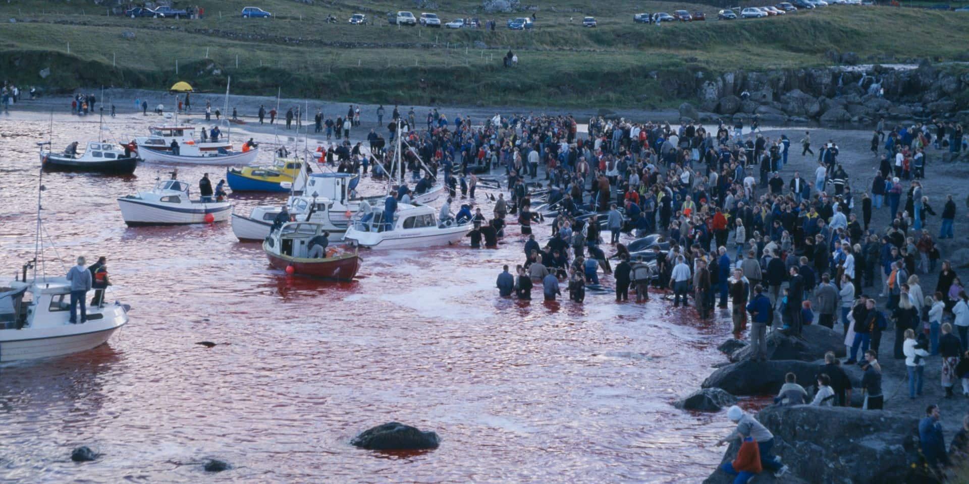 Le Grindadráp, cette tradition mortelle durant laquelle des centaines de dauphins sont massacrés