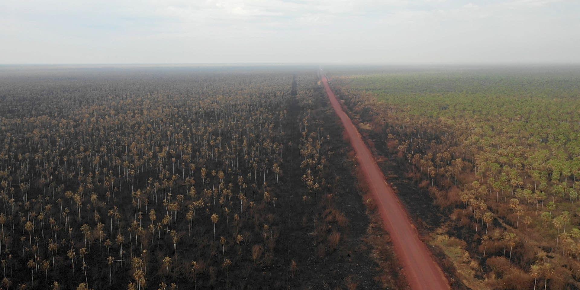 L'Amazonie n'est pas menacée que par les feux ou la déforestation...
