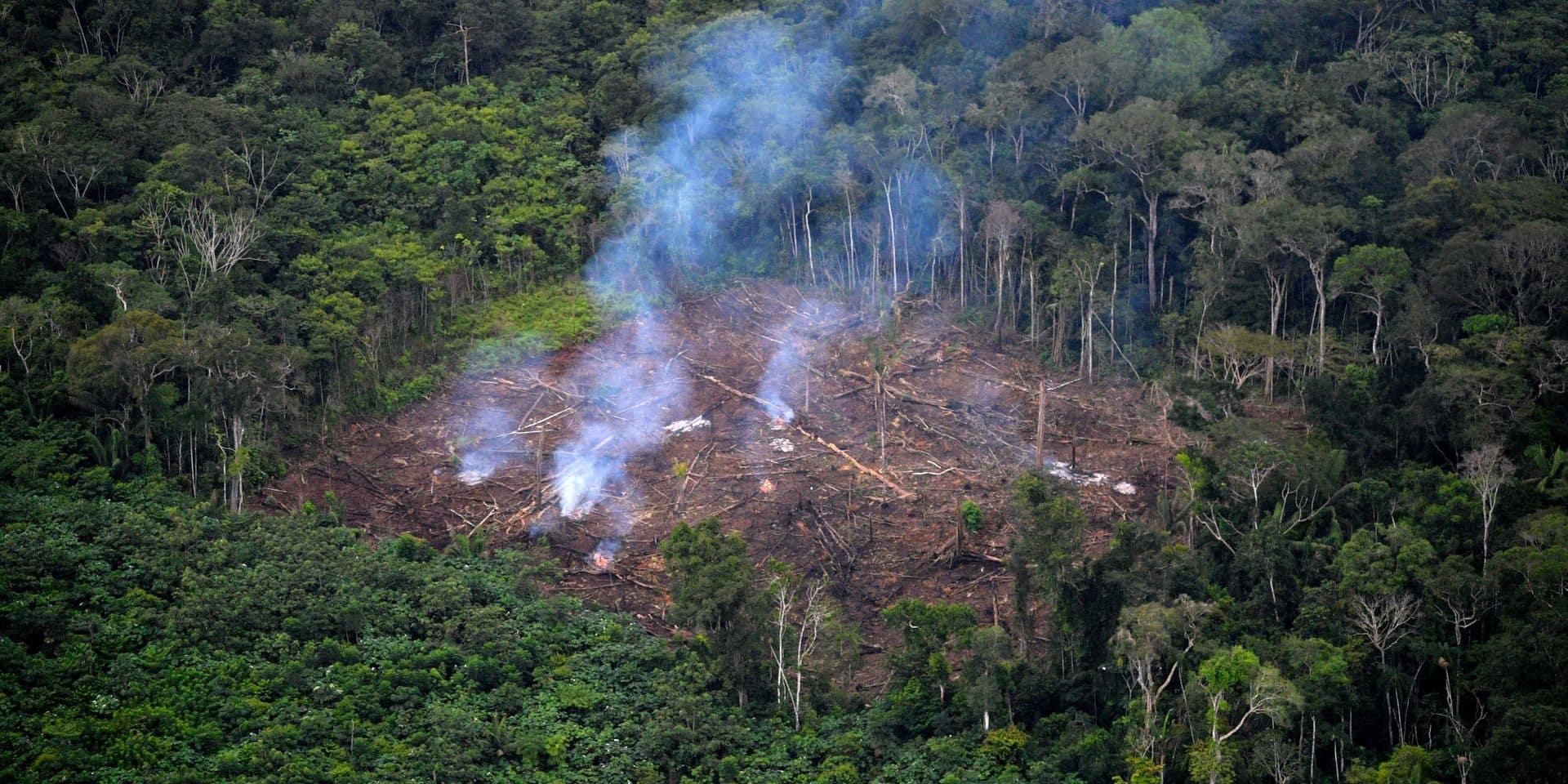 """La forêt amazonienne a le souffle court: """"Notre dernier rempart est en train de basculer"""""""