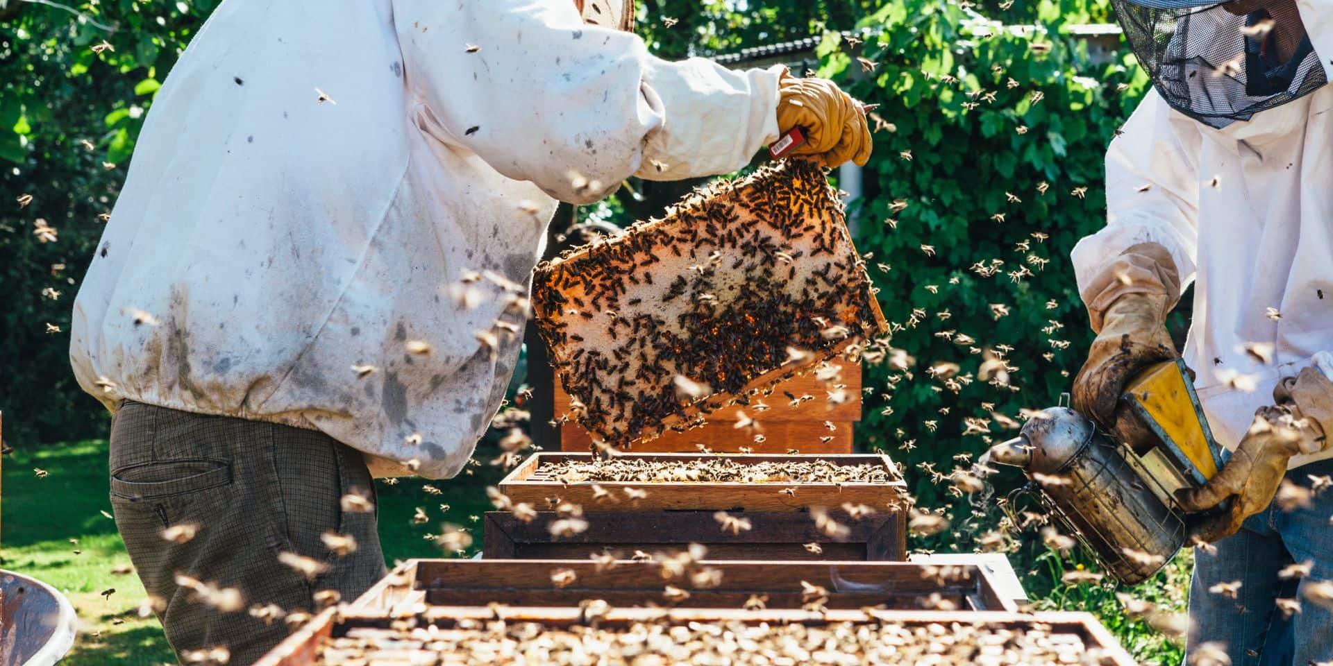 L'intelligence artificielle va-t-elle sauver les forêts et les abeilles ?