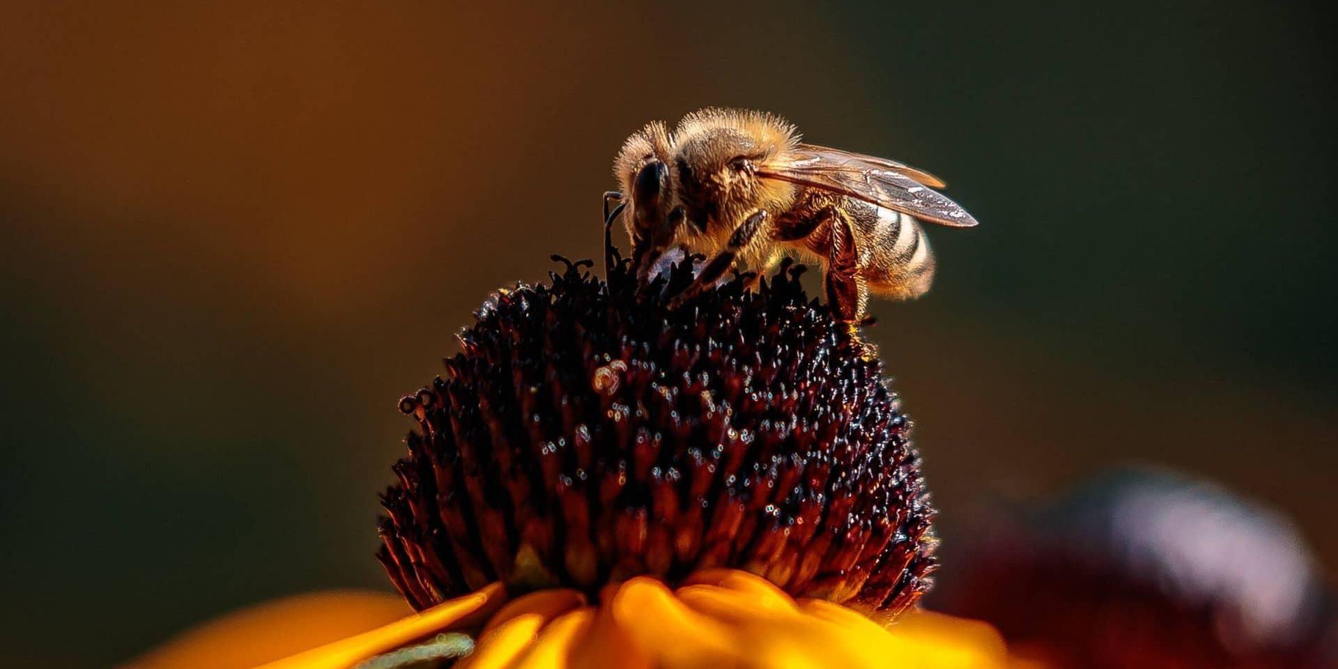 La holding wallonne Floridienne rachète une entreprise américaine spécialisée dans les insectes
