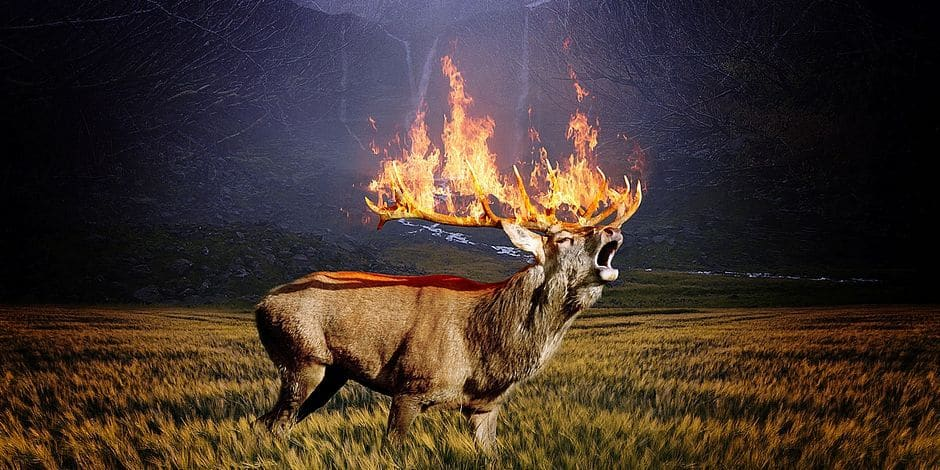 Forest Brand Fire Forest Fire Hirsch Roe Deer
