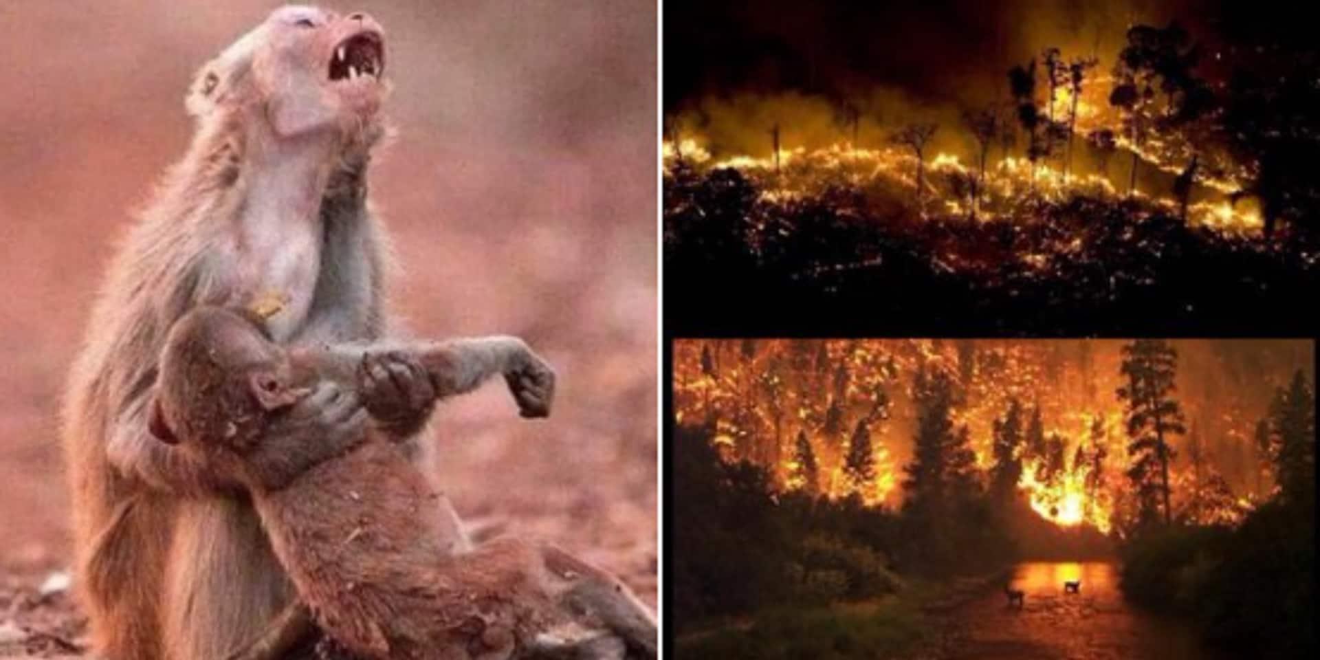 Ces fausses informations et images qui circulent au sujet des incendies en Amazonie (PHOTOS)