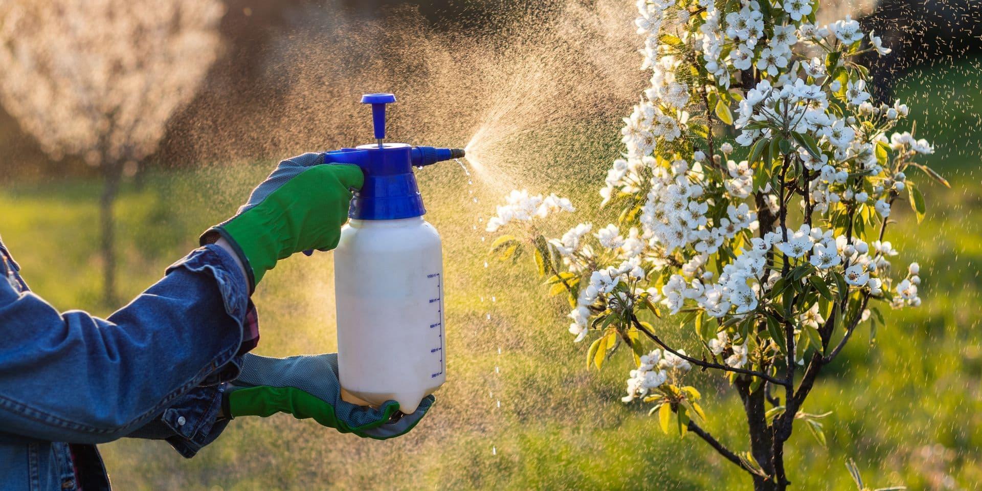 Bayer vend une partie de ses activités de pesticides contre les parasites, maladies et mauvaises herbes