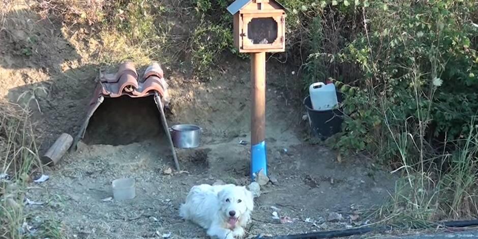 Son propriétaire est mort il y a de nombreux mois, pourtant son chien refuse de le quitter