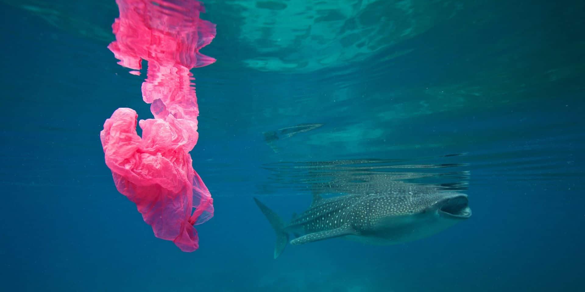 Dévastés par le dérèglement climatique et l'action des hommes, les océans s'apprêtent à déchaîner leur puissance sur l'humanité