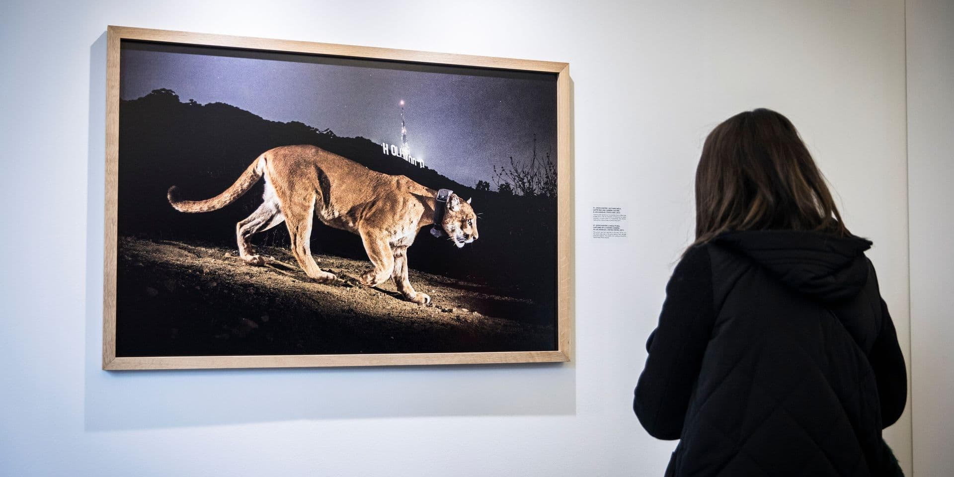 """Première belge : le """"National Geographic"""" s'expose à Stavelot !"""