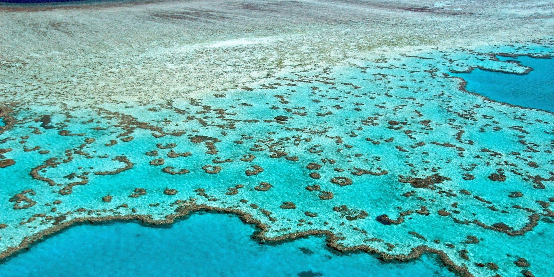 Nuages brilliants, tolérance à la chaleur: comment ralentir la disparition de la Grande Barrière de corail?