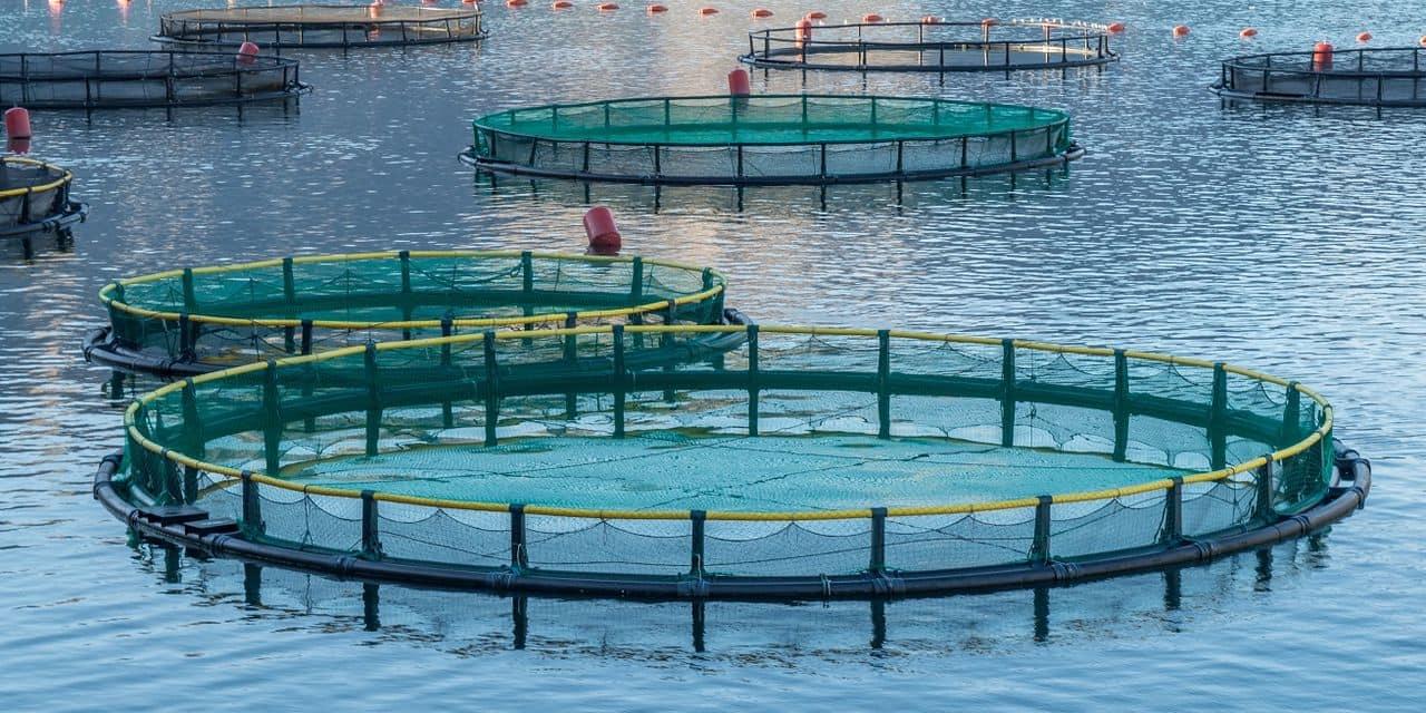 Coronavirus: la situation critique pour les aquaculteurs wallons