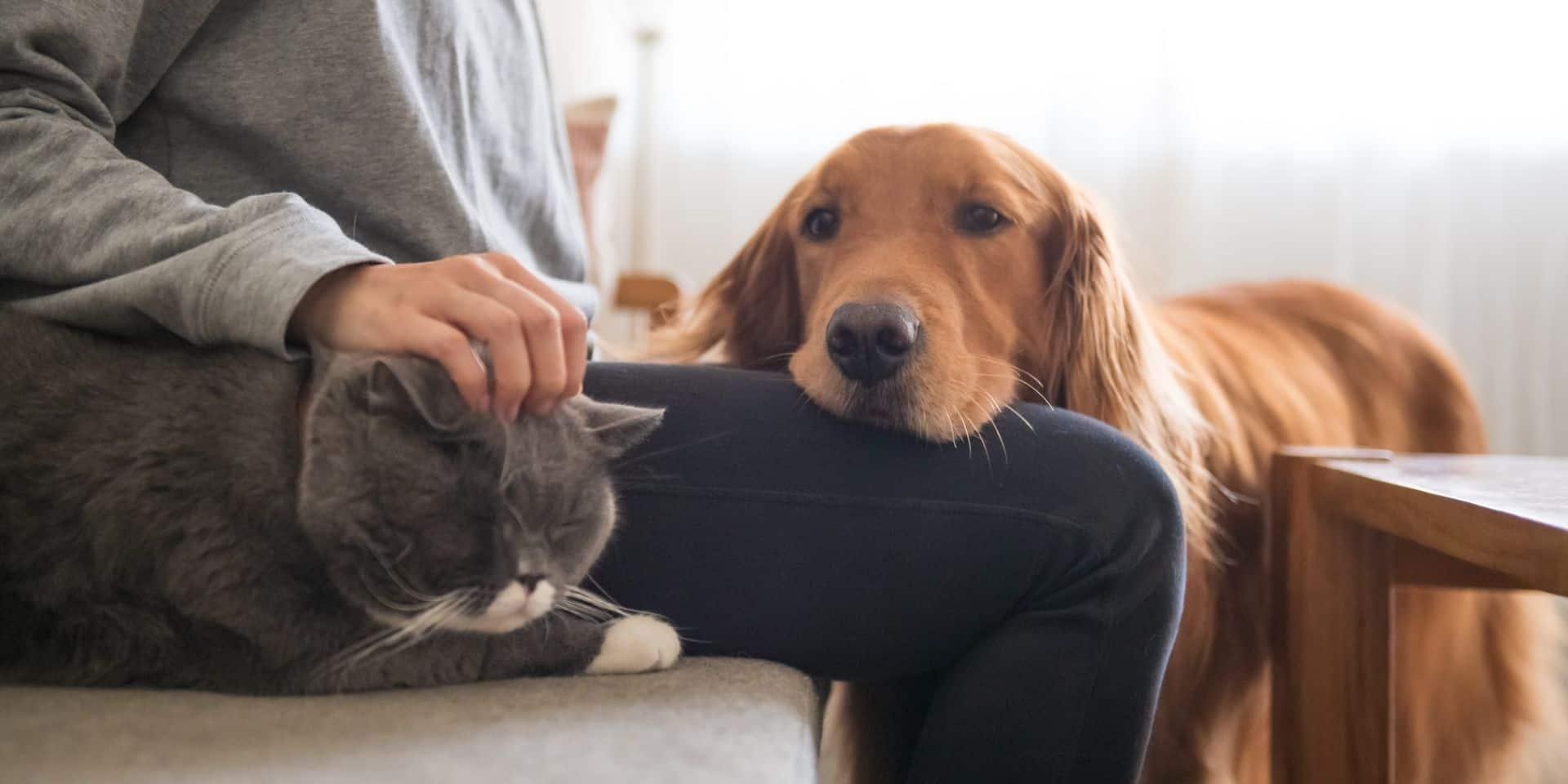 """Des congés accordés pour les propriétaires d'animaux: """"Une mesure qui contribue au bien-être des travailleurs"""""""