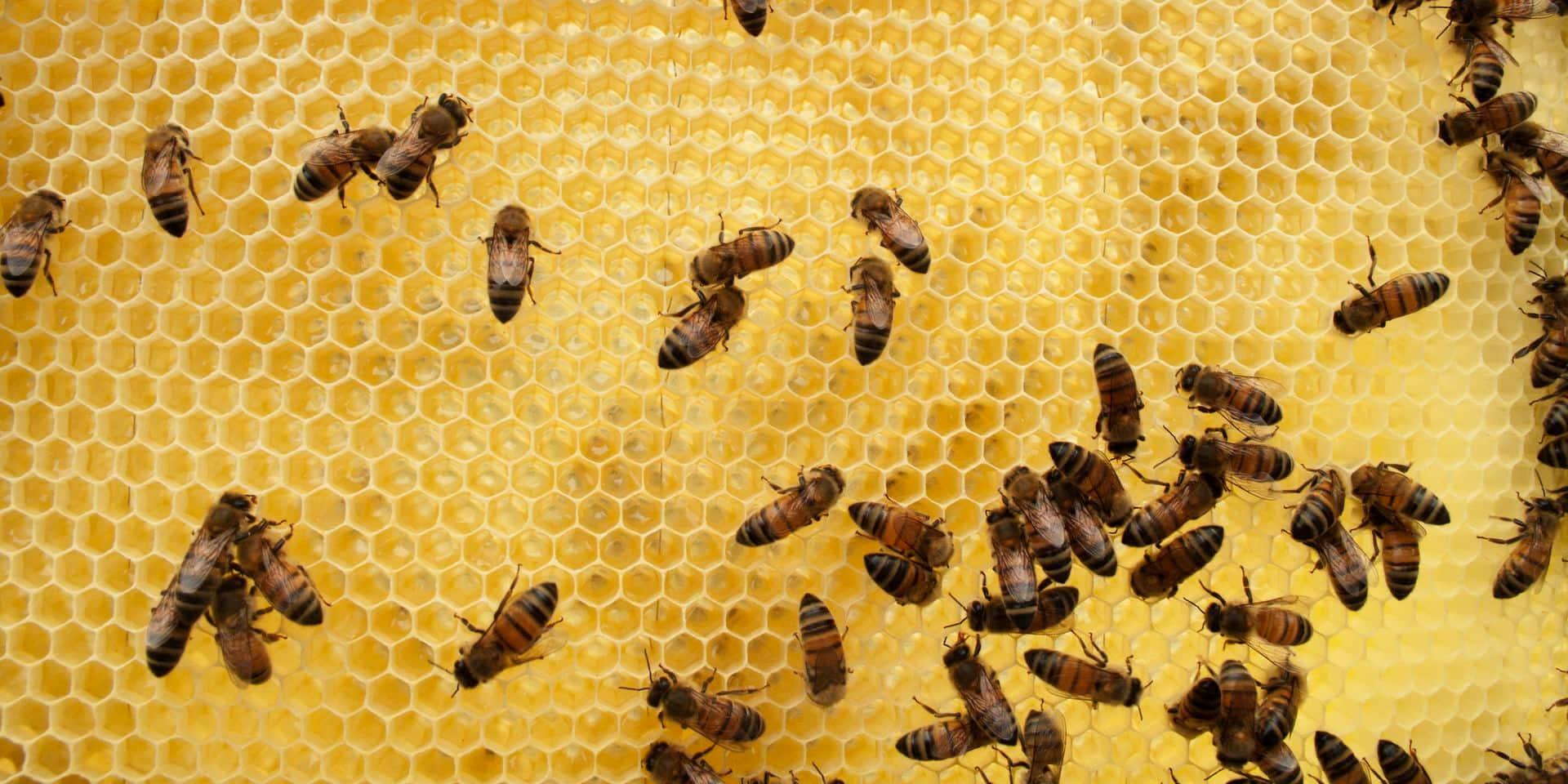 Les Etats-Unis lèvent une interdiction d'utilisation de pesticides tueurs d'abeilles