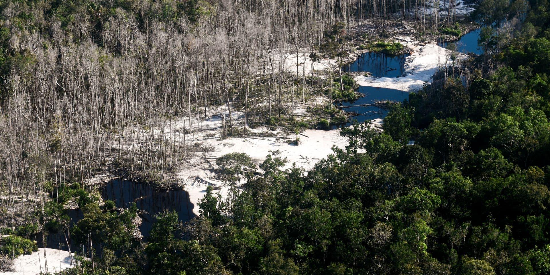 Amazonie: pendant l'épidémie, la déforestation s'accélère