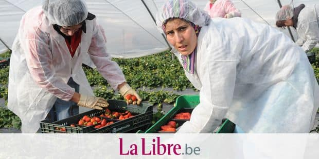 Moroccan seasonal women employees work at the Huelva farm to pick some strawberries in Lepe on March 7, 2009. Only Moroccan married mothers were allowed to have a three-month seasonal contract with the obligation to leave their family at home, a guarantee for the Spanish governement they will return to Morrocco. Conditions for women in Morocco improved but 'could do better' according to rights' activists. AFP PHOTO/ABDELHAK SENNA / AFP PHOTO / ABDELHAK SENNA