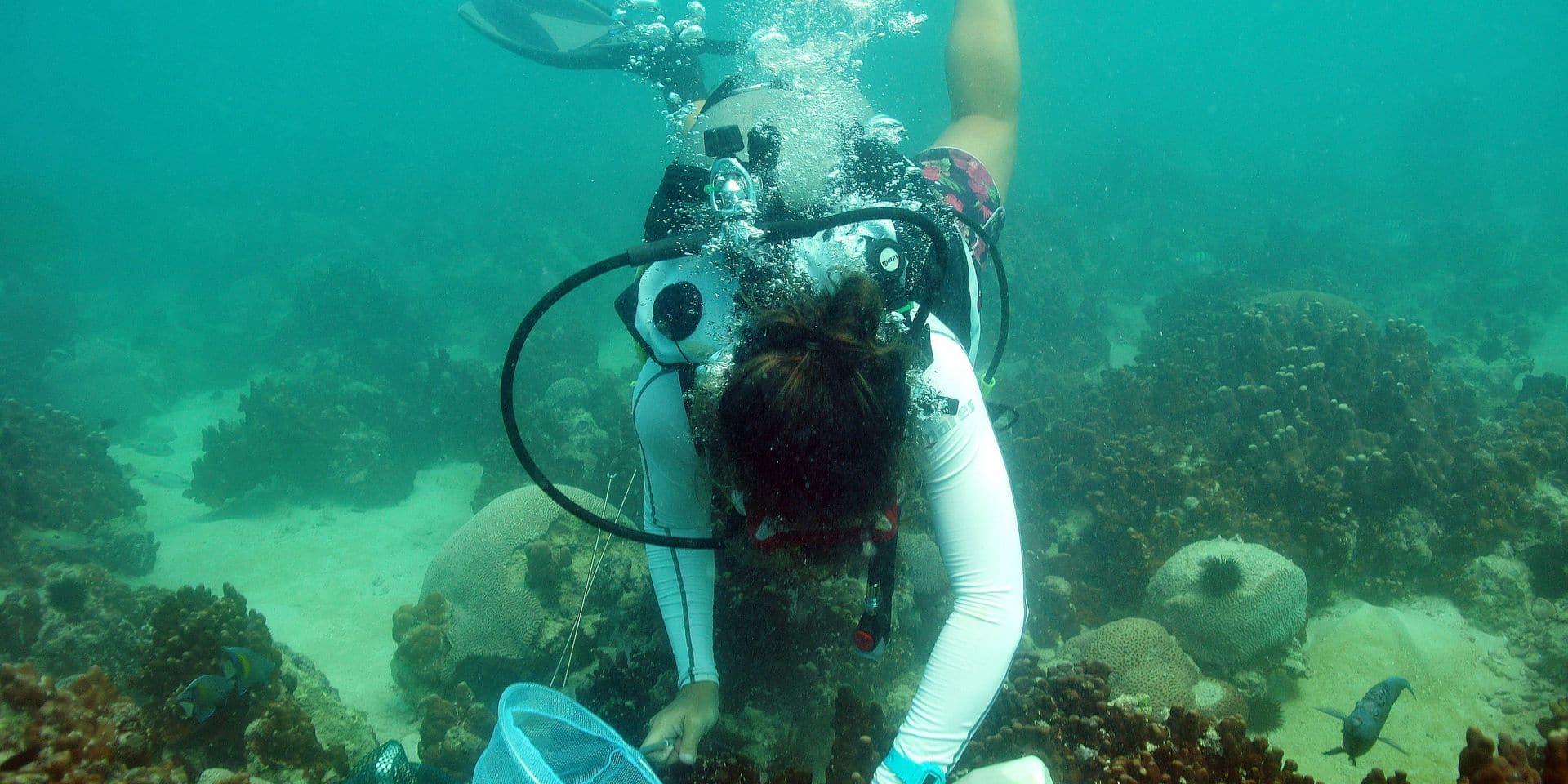 Les superpouvoirs des coraux du golfe Persique