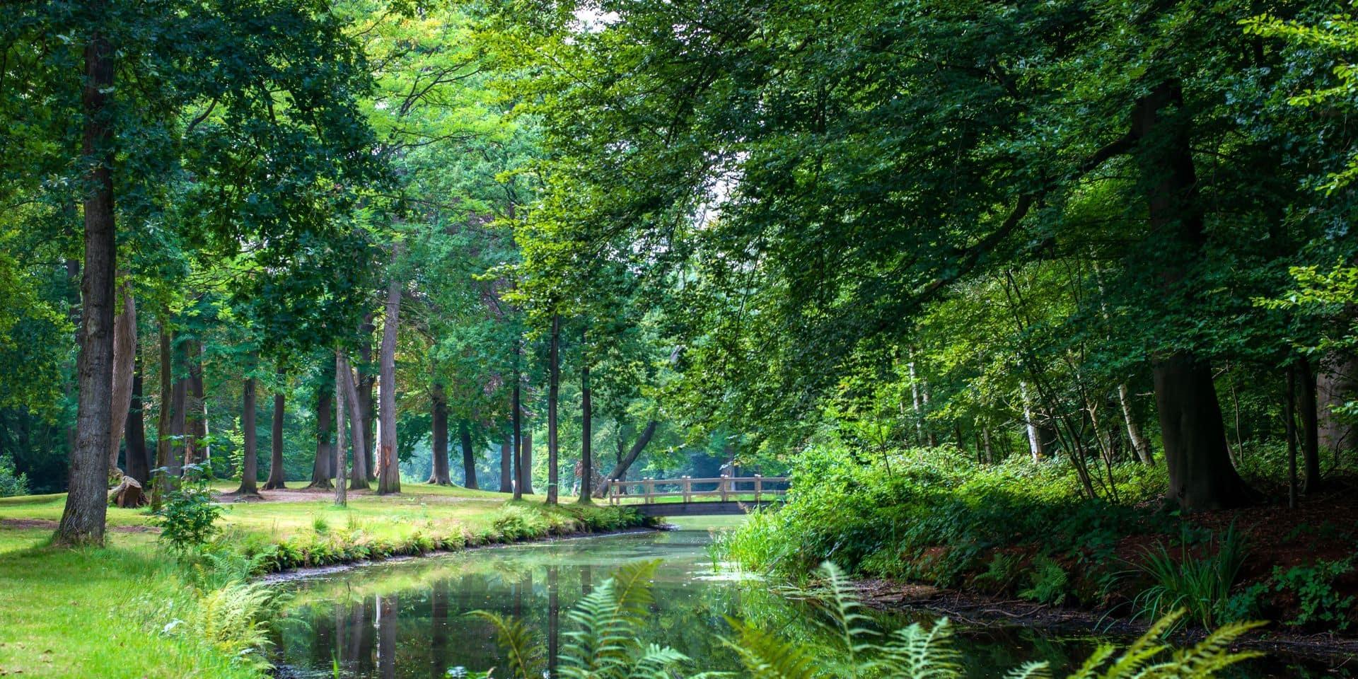 Se balader dans la nature, c'est agréable mais prendre un bain de forêt, cela nous soigne !