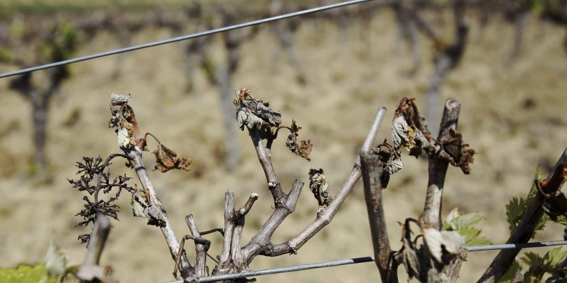En France, le gel impacte le prix des fruits et la production de vin