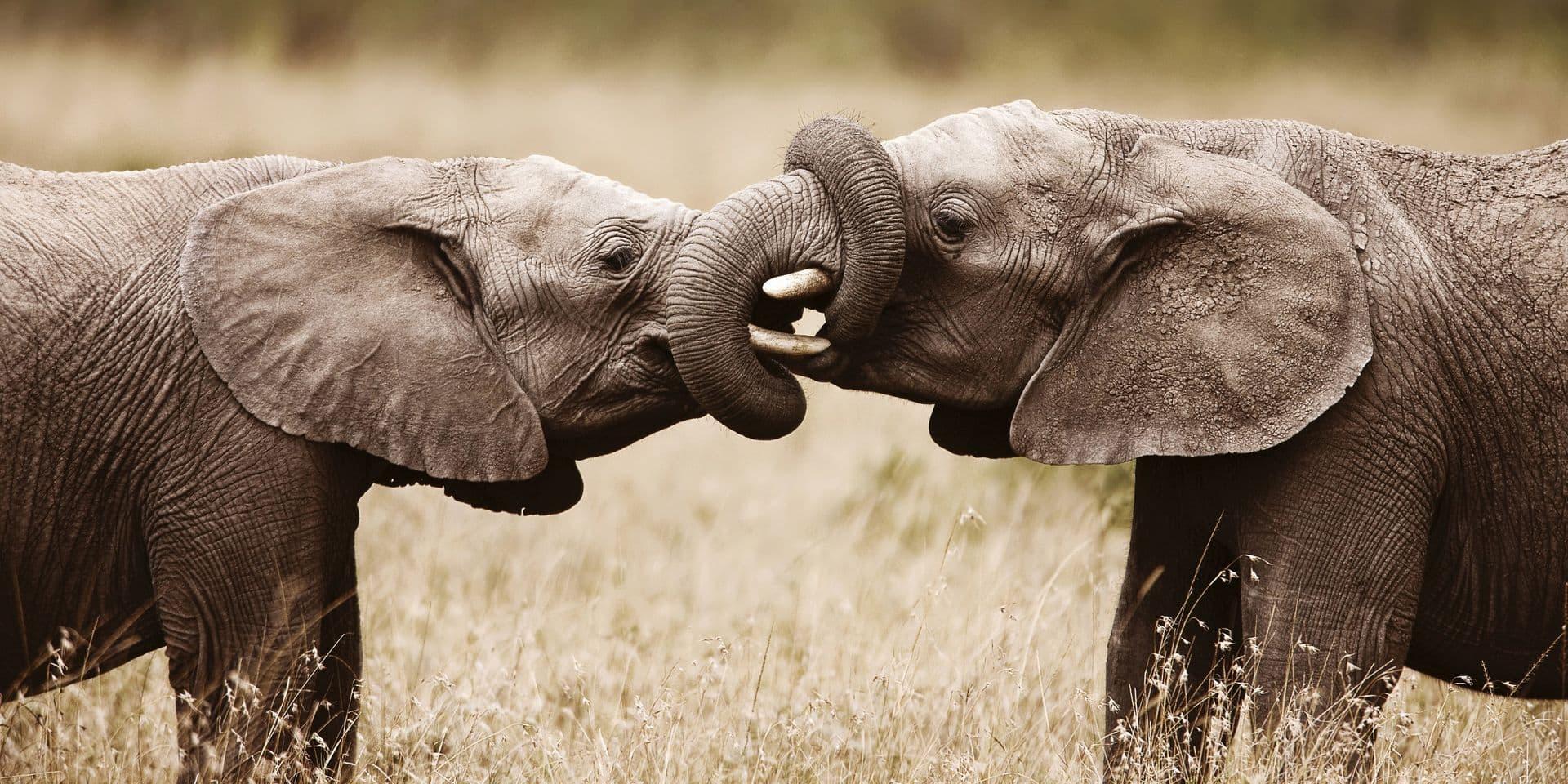 Ariane Bois et l'amour des éléphants