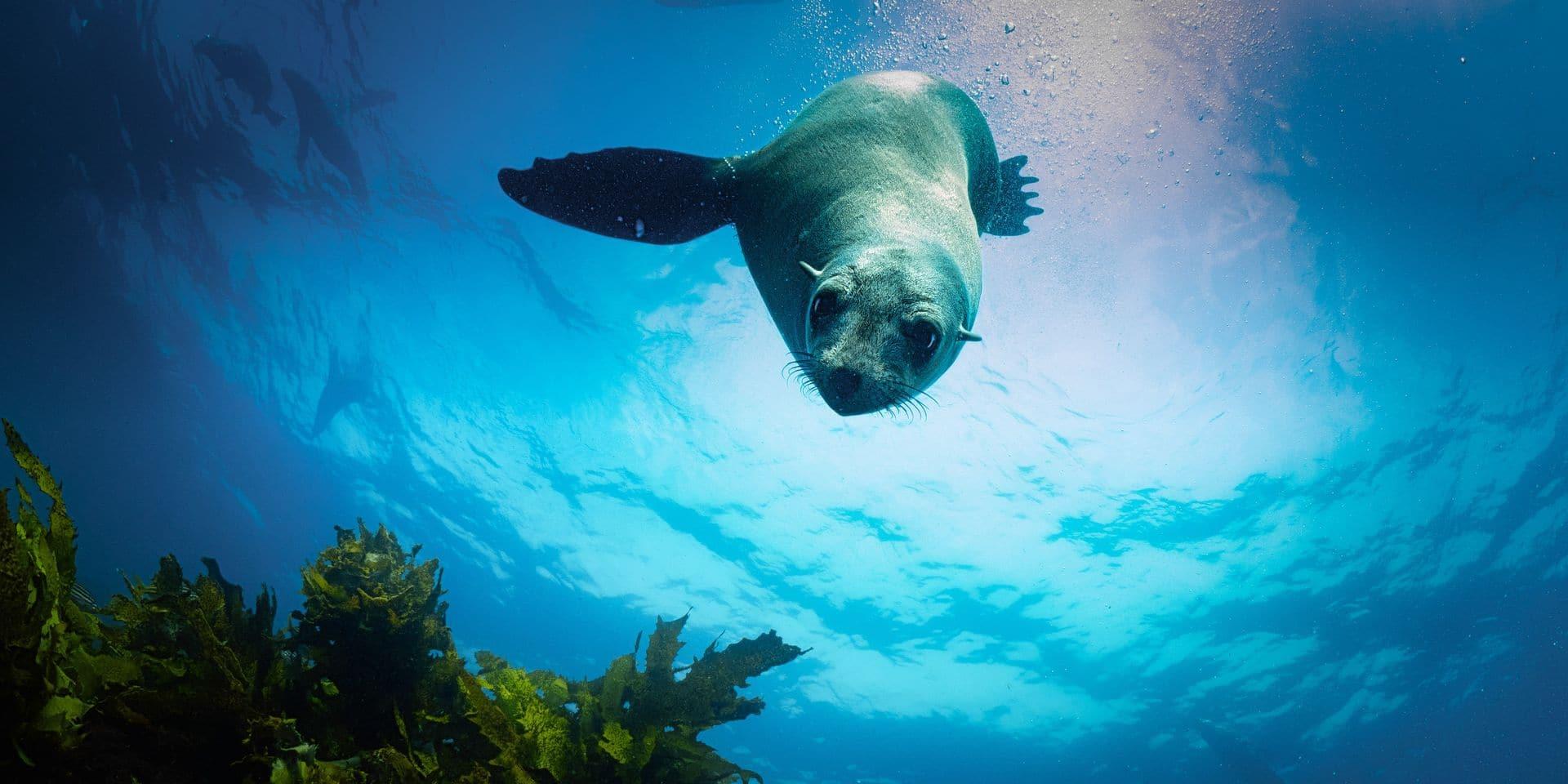 Australie, l'Odyssée Océanique - Voyage avec le courant Est Australien