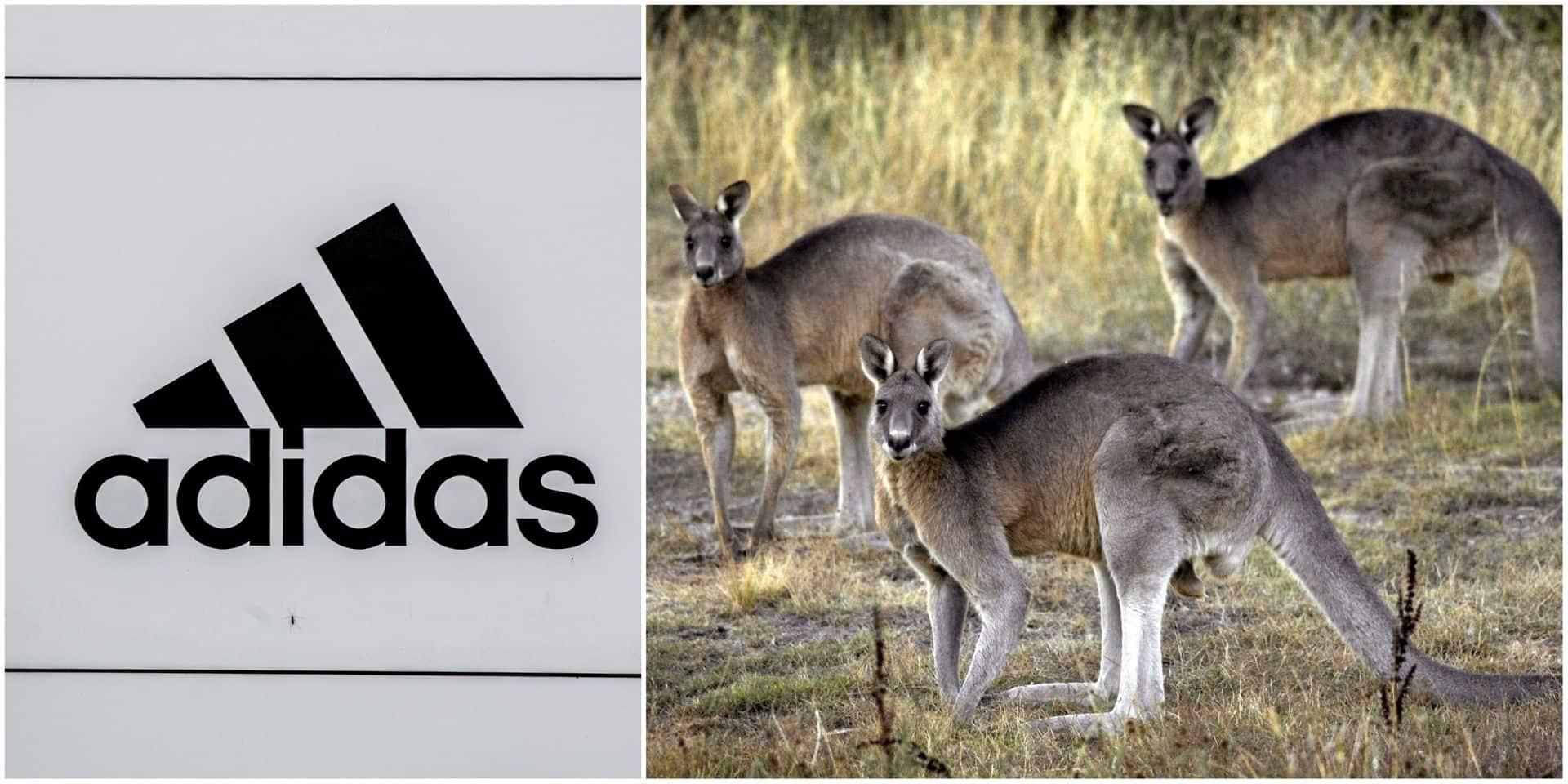 Gaia lance une campagne pour qu'Adidas cesse la vente de chaussures en cuir de kangourou