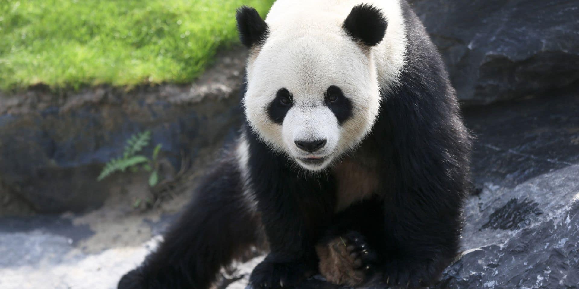Le parc Pairi Daiza rejoint la Coalition mondiale pour la biodiversité