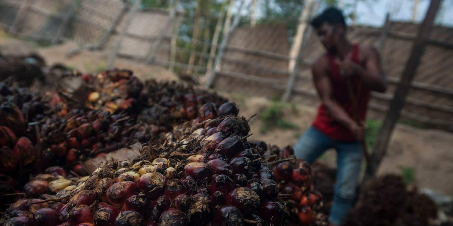 """L'huile de palme """"décime"""" les espèces mais l'interdire serait vain"""