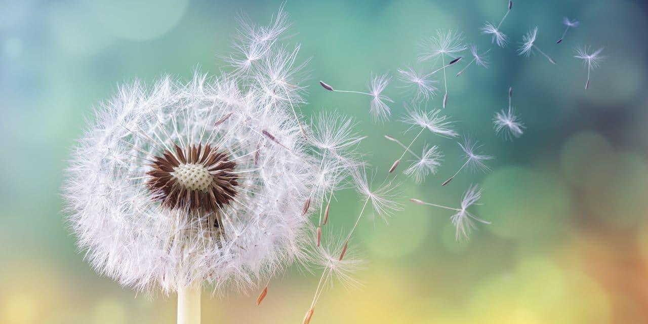 Le pollen pourrait augmenter les chances d'attraper le coronavirus, selon une étude - lalibre.be