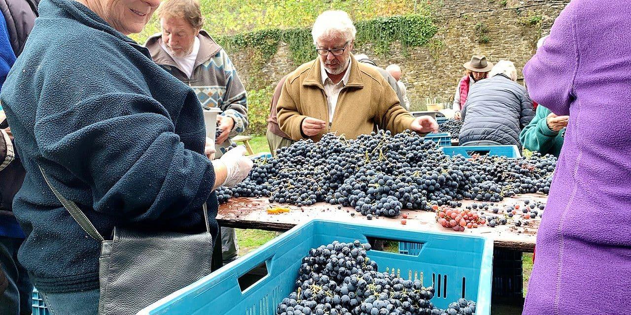 Encore une belle année pour le vignoble de l'abbaye