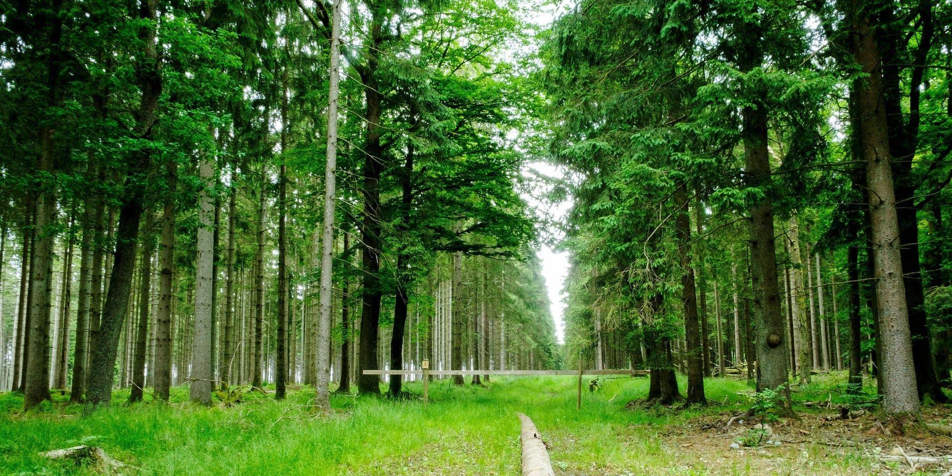 """Les Belges candidats à l'acquisition d'une forêt en Ardenne : """"Un petit chalet autorisé dans des bois, et les prix s'emballent"""""""